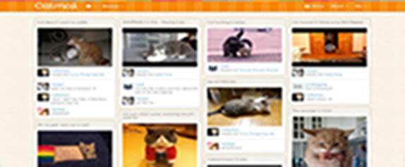 kedi_severler_catmoji
